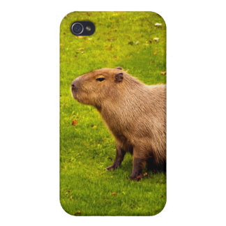 Capybara Cover For iPhone 4