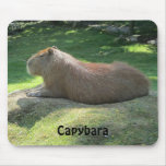 Capybara - Giant Rodent Mouse Pad