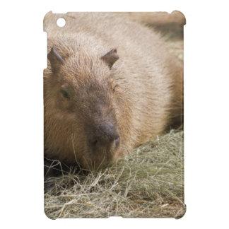 Capybara - hydrochaeris de Hydrochoeuis
