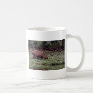 Capybara (hydrochaeris del Hydrochoerus) Tazas De Café