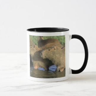 Capybara, Hydrochaeris hydrochaeris), world's Mug
