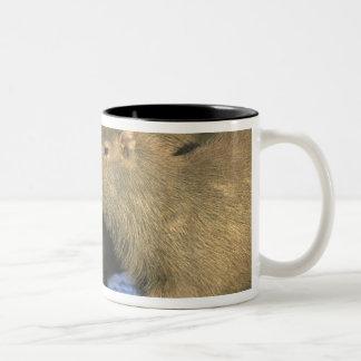 Capybara, Hydrochaeris hydrochaeris), world's Two-Tone Coffee Mug