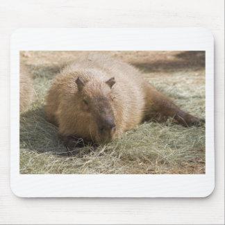Capybara - Hydrochoeuis hydrochaeris Mousepad