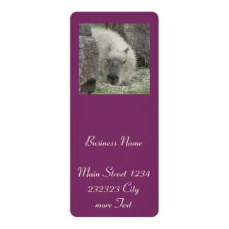 capybara 4x9.25 paper invitation card