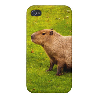 Capybara iPhone 4/4S Case