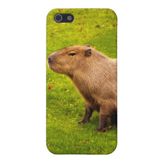 Capybara iPhone SE/5/5s Case