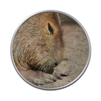 Capybara Jarrones De Dulces