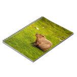 Capybara Libreta