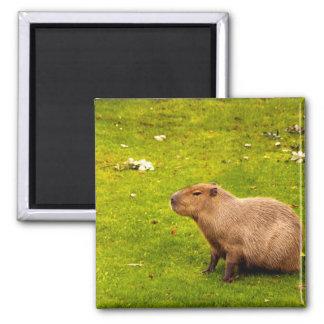 Capybara Magnet