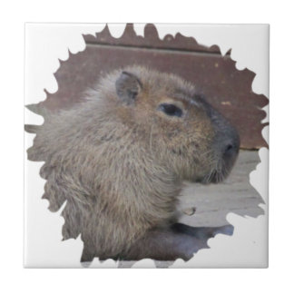 capybara, máscara azulejo cuadrado pequeño
