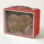 "Capybara Metal Lunch Box<br><div class=""desc"">Photograph of a capybara at the Brandywine Zoo in Wilmington,  Delaware.</div>"
