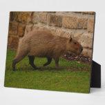 capybara photo plaque