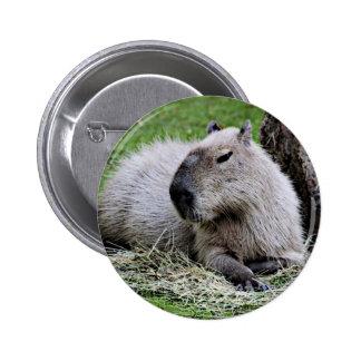 capybara, pin redondo de 2 pulgadas