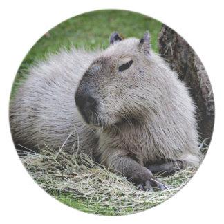 capybara, dinner plates