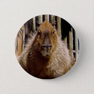 Capybara Staring Pinback Button