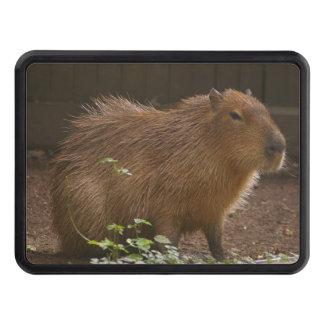 Capybara Trailer Hitch Cover