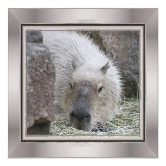 capybara magnetic invitations