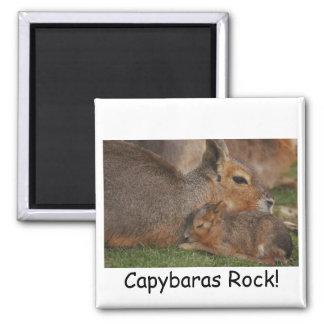 Capybaras Imán Cuadrado