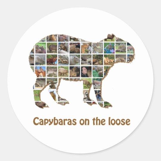 Capybaras on the loose classic round sticker