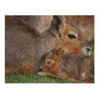 Capybaras Tarjeta Postal