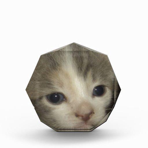 Cara adorable del gatito