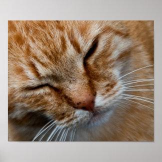 Cara anaranjada del gato poster