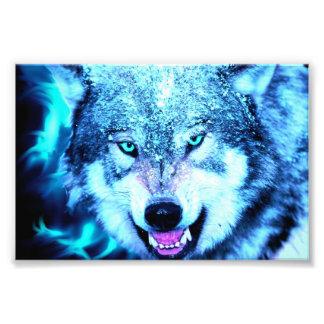 Cara azul del lobo fotografías