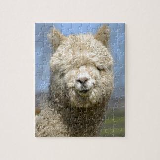Cara blanca borrosa de la alpaca puzzle