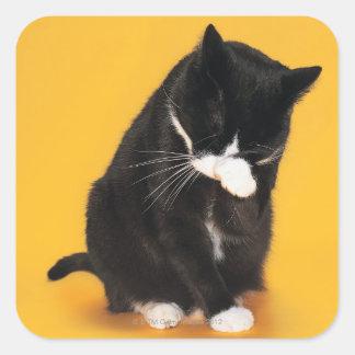 Cara blanco y negro de la limpieza del gato con la colcomanias cuadradass