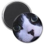 Cara blanco y negro linda del gato imán de frigorífico