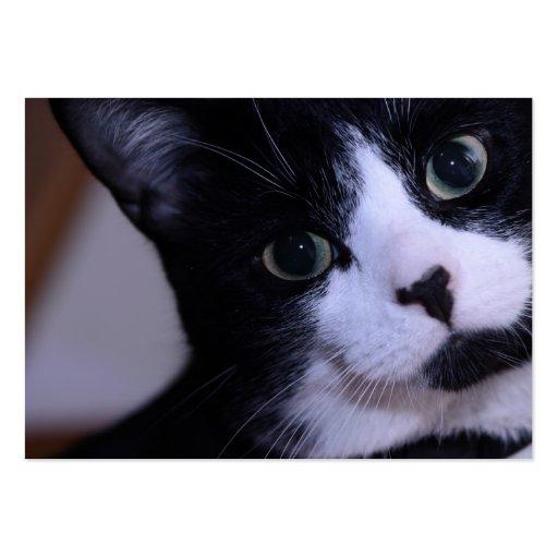 Cara blanco y negro linda del gato tarjetas de negocios