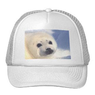 Cara de cría de foca gorras