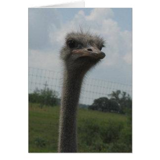 """Cara de la avestruz del """"mí soy"""" Notecard triste Felicitacion"""