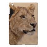 Cara de la leona iPad mini fundas