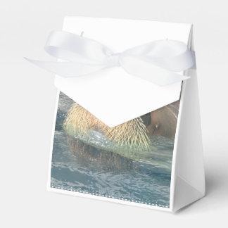 Cara de la morsa cajas para regalos