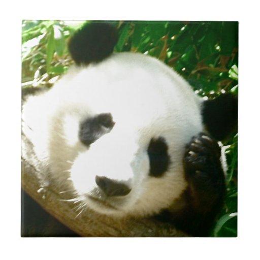 Cara de la panda azulejo cerámica