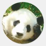 Cara de la panda etiquetas redondas