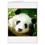 Cara de la panda tarjetas