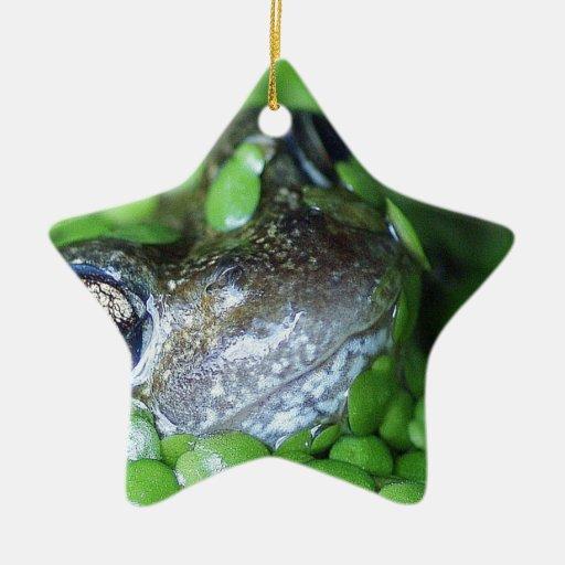 Cara de la rana adorno navideño de cerámica en forma de estrella