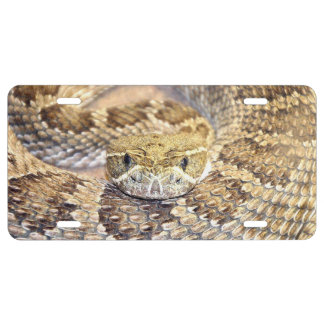 Cara de la serpiente de cascabel de pradera