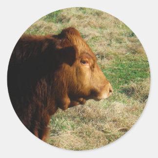 Cara de la vaca del toro de Brown Pegatina Redonda