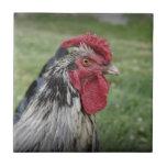 Cara de las aves tejas  cerámicas