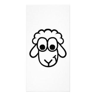 Cara de las ovejas tarjeta fotográfica