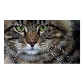Cara de las tarjetas de una visita felinas (del ga tarjetas de visita