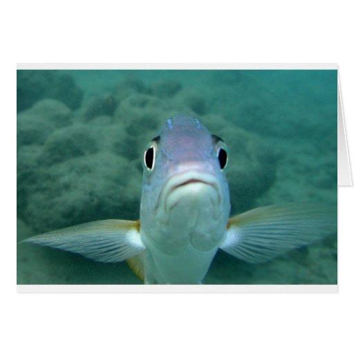 Cara de los pescados tarjeta de felicitación
