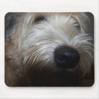 Cara de trigo del perro de Terrier Alfombrillas De Ratones