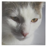 Cara de un gato azulejo