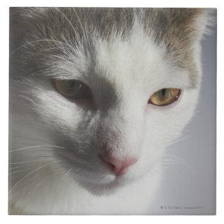 Cara de un gato azulejo cuadrado grande
