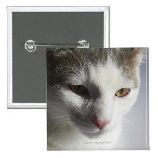 Cara de un gato pin cuadrado