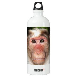 Cara de un mono